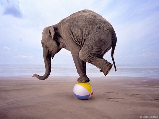 iepra - Self Emotional Balancing SEB ©